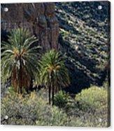 Desert Palms Acrylic Print