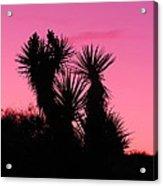 Desert Pink Acrylic Print