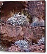 Desert Plant Life Acrylic Print