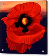 Desert Poppy Acrylic Print