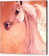 Desert Prince Arabian Stallion Acrylic Print