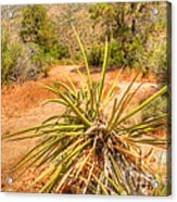 Desert Reds And Greens Acrylic Print