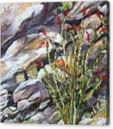 Desert Stillness Acrylic Print by Caroline Owen-Doar