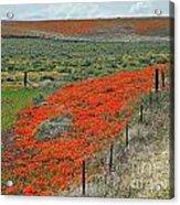 Desert Wildflowers Acrylic Print