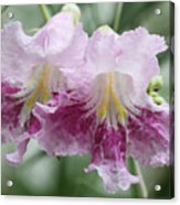 Desert Willow Acrylic Print