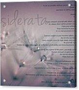 Desiderata - Dandelion Tears Acrylic Print