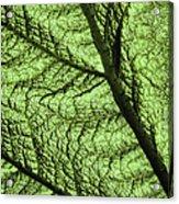 Design In Nature Acrylic Print