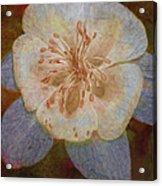 Designer Floral Acrylic Print
