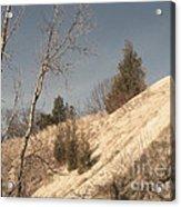 Desolate For A Season Acrylic Print