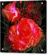 Detailed Roses Acrylic Print