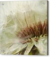 Details By Design Acrylic Print
