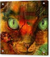 Devon Rex - Lit From Within Acrylic Print