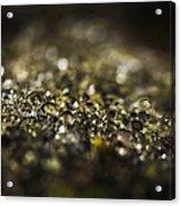 Dew 9202 Acrylic Print