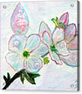 Dew And Smell Of Almond Flowers Acrylic Print