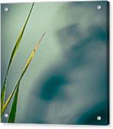 Dew Drop Acrylic Print by Bob Orsillo