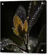 Dew Drops And Crystals Acrylic Print