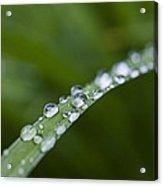 Dew Drops On Green Leaf Acrylic Print