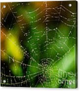 Dew Drops On Spider Web  Acrylic Print