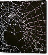Dew Drops On Spider Web 4 Acrylic Print