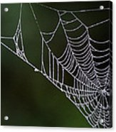 Dew In Early Morning Light Acrylic Print