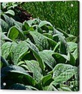 Dew Kissed Foliage Acrylic Print