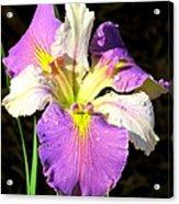Dew On An Iris Acrylic Print