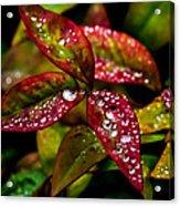 Dew On Autumn Leaves Acrylic Print