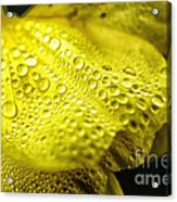 Dew On Primrose Acrylic Print