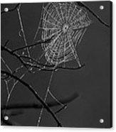 Dew Web-signed-#3322 Acrylic Print
