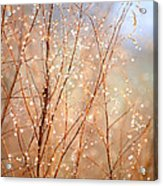 Dewdrop Morning Acrylic Print