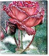 Dewey Rose Acrylic Print