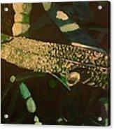 Dewy Blade Acrylic Print