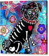 Dia De Los Muertos Pug Acrylic Print by Pristine Cartera Turkus