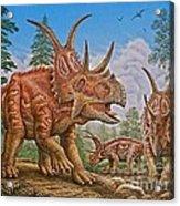 Diabloceratops Acrylic Print