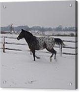 Diamond Appaloosa In The Snow Acrylic Print