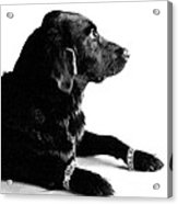 Diamonds Are A Dogs Best Friend Acrylic Print