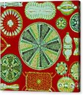 Diatoms-ernst Haeckel Acrylic Print