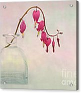 Dicentra In A Glass Vase 2 Acrylic Print