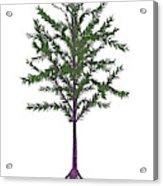 Dicroidium Prehistoric Seed Plant Acrylic Print