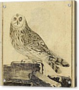 Die Stein Eule Or Church Owl Acrylic Print