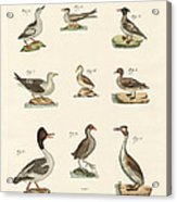 Different Kinds Of Waterbirds Acrylic Print