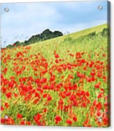 Digital Art Field Of Poppies Acrylic Print by Natalie Kinnear