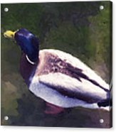 Digital Duck Acrylic Print