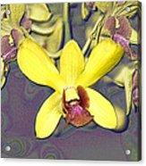 Digitised Orchids Acrylic Print