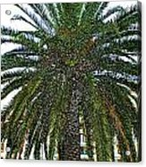 Digitized Cali Palm  Acrylic Print