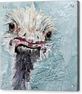 Dimples - An Ostrich Acrylic Print