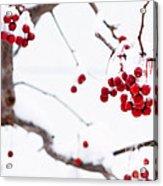 Dingle Berries II Acrylic Print