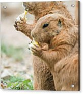Dining Out With Friends Acrylic Print