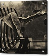 Dinosaur Bones 2 Acrylic Print
