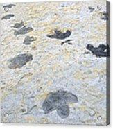 Dinosaur Tracks Acrylic Print